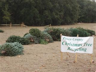 Christmas Tree Drop off at Starkey Park, New Port Richey