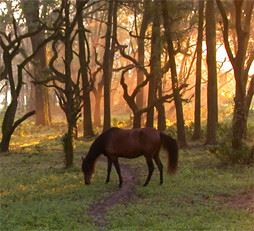 Horse grazing in the woods