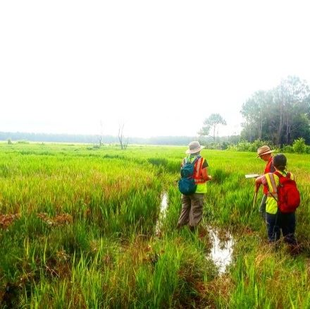 delineating a wetland