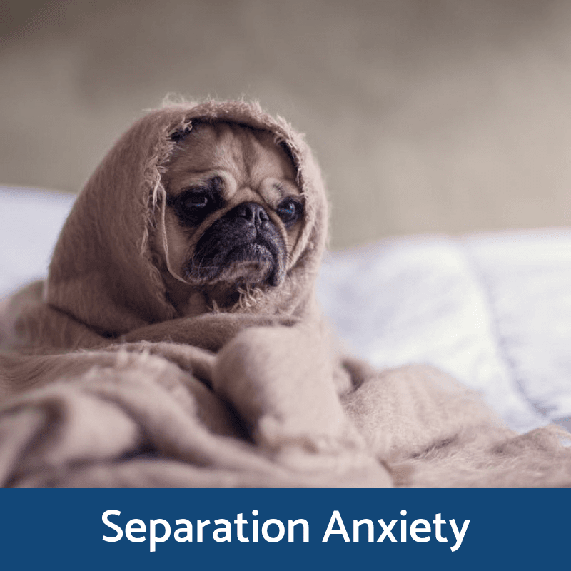 Separation Anixiety