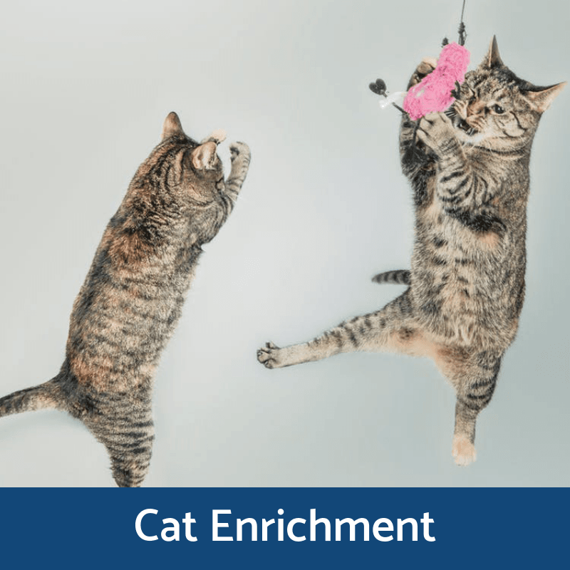 Cat Enrichment