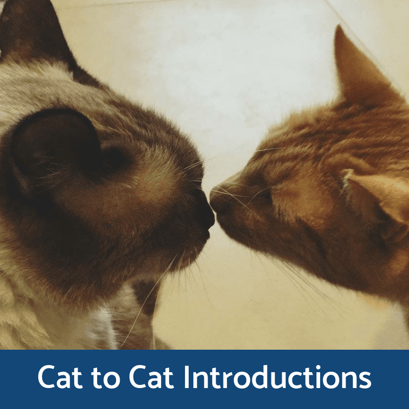Cat To Cat Introductions