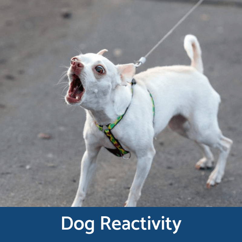 Dog Reactivity