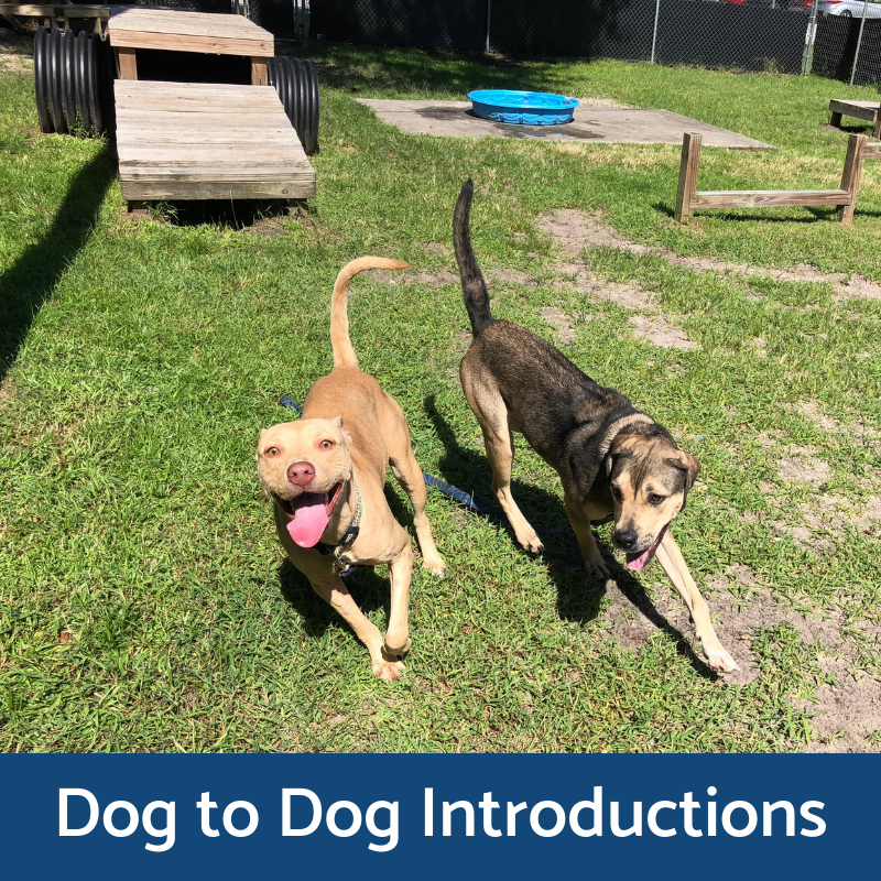Dog to Dog Introductions