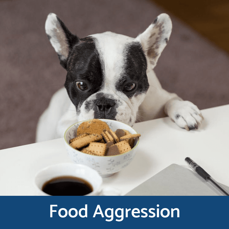 Food Aggression