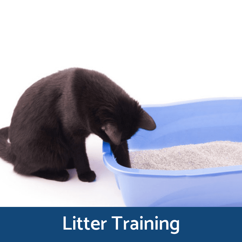 Litter Training