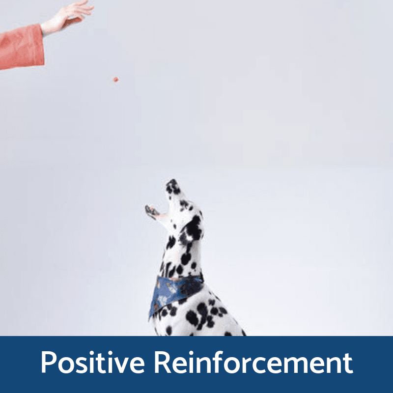 Positive Reinforcement Training