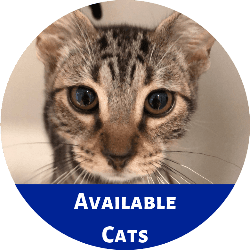 Click this link to go to Petango to view cats available for adoption.