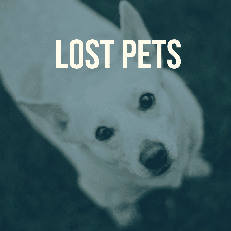 Lost Pet Information Page