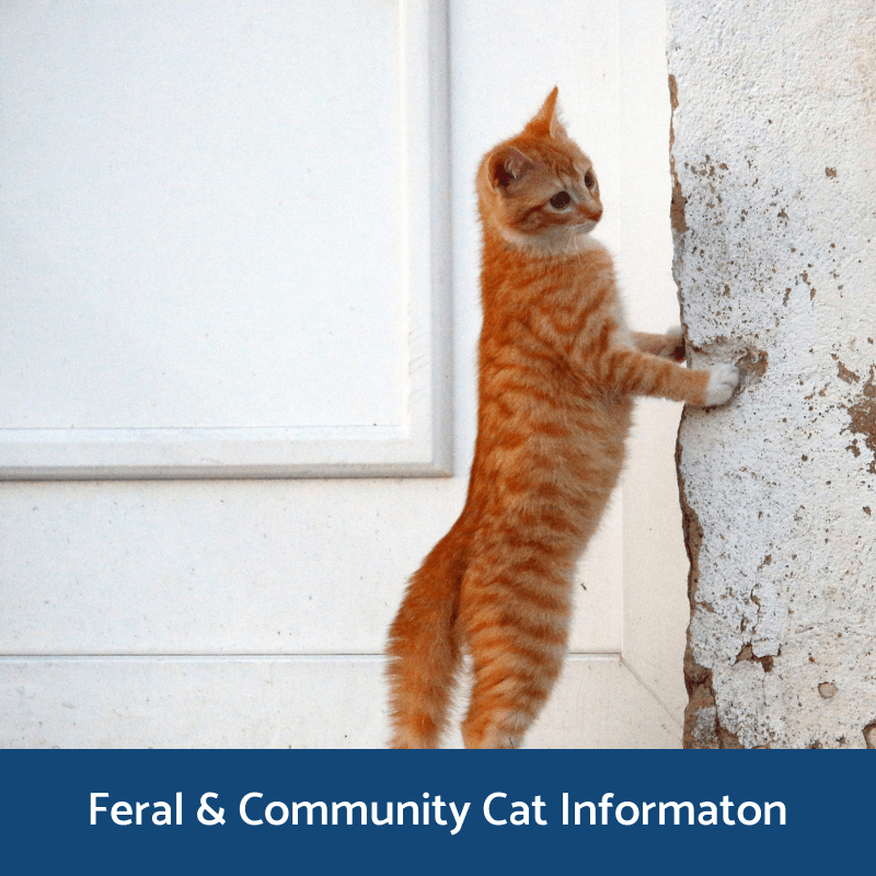 Feral & Community Cat Information