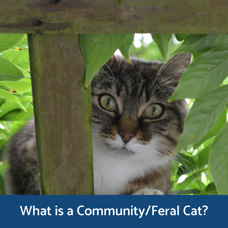 Information on what community/feral cats are from Alley Cat Allies