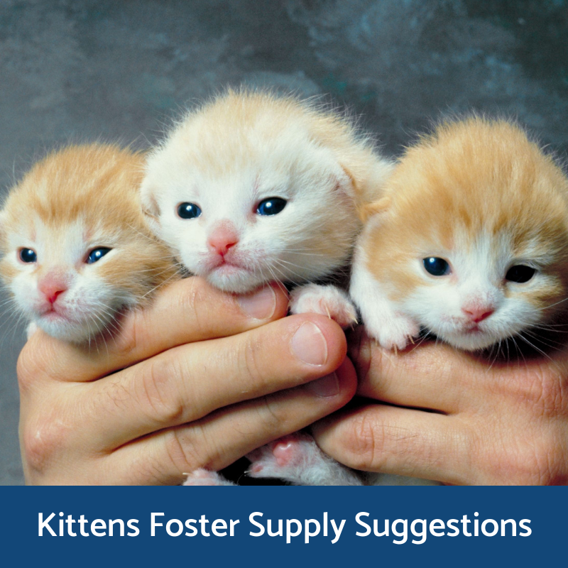 Kitten Foster Supply Suggestions