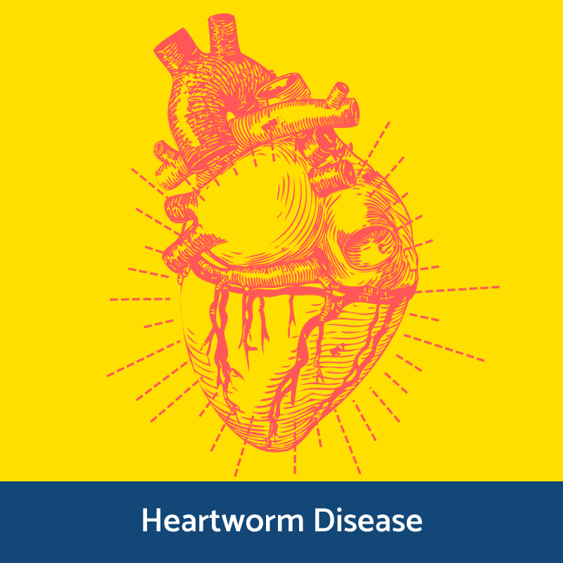 Information on heartworm disease