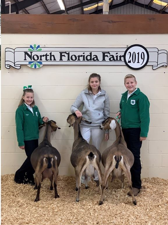 4H Club Members with Goats at North Florida Fair 2019