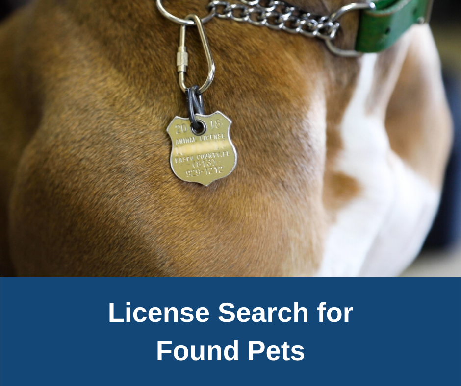 Pasco County Animal License Search
