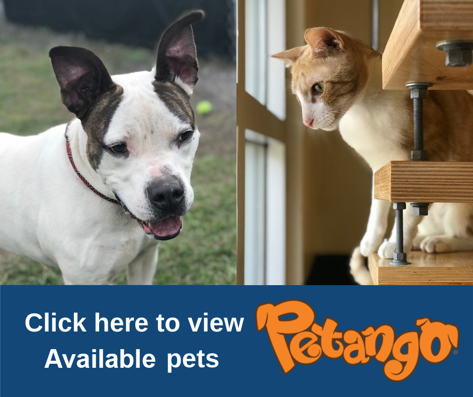 View available pets on Petango