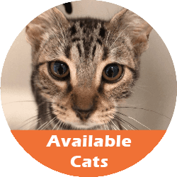 available cats