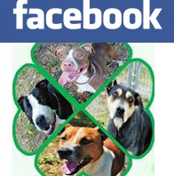 Animal Services Facebook