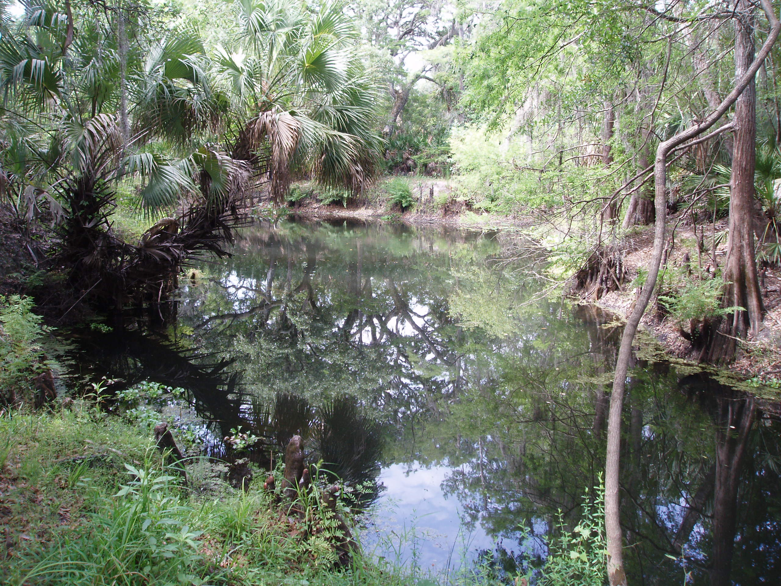 View of Cypress Creek